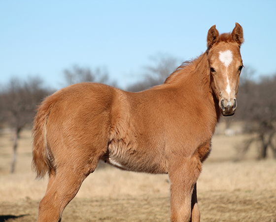 CD Diamond x Bearly Nuf Taz - 2017 Colt