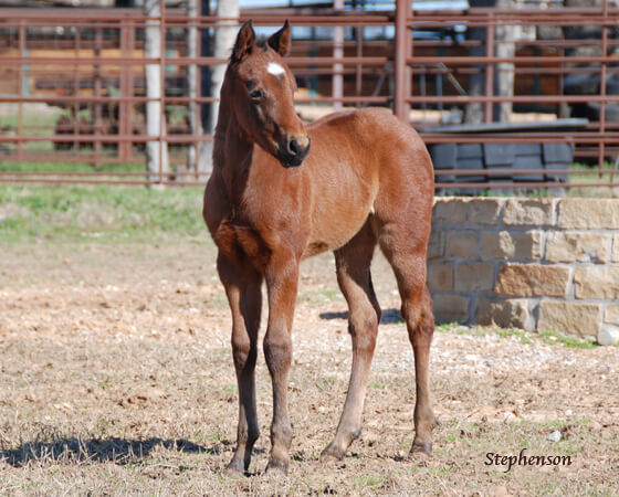 CD Diamond x Highly Unlimited - 2018 Filly
