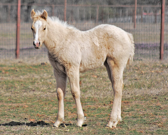 CD Diamond x SJR Metallic Bunny - 2020 Filly